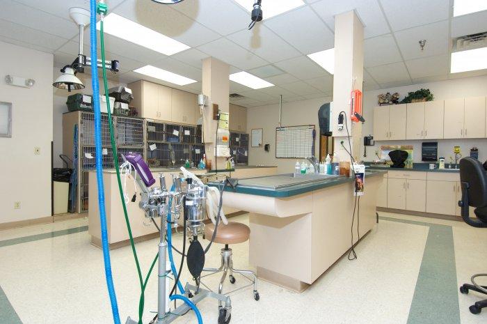 VCA Mesa Animal Hospital image 6