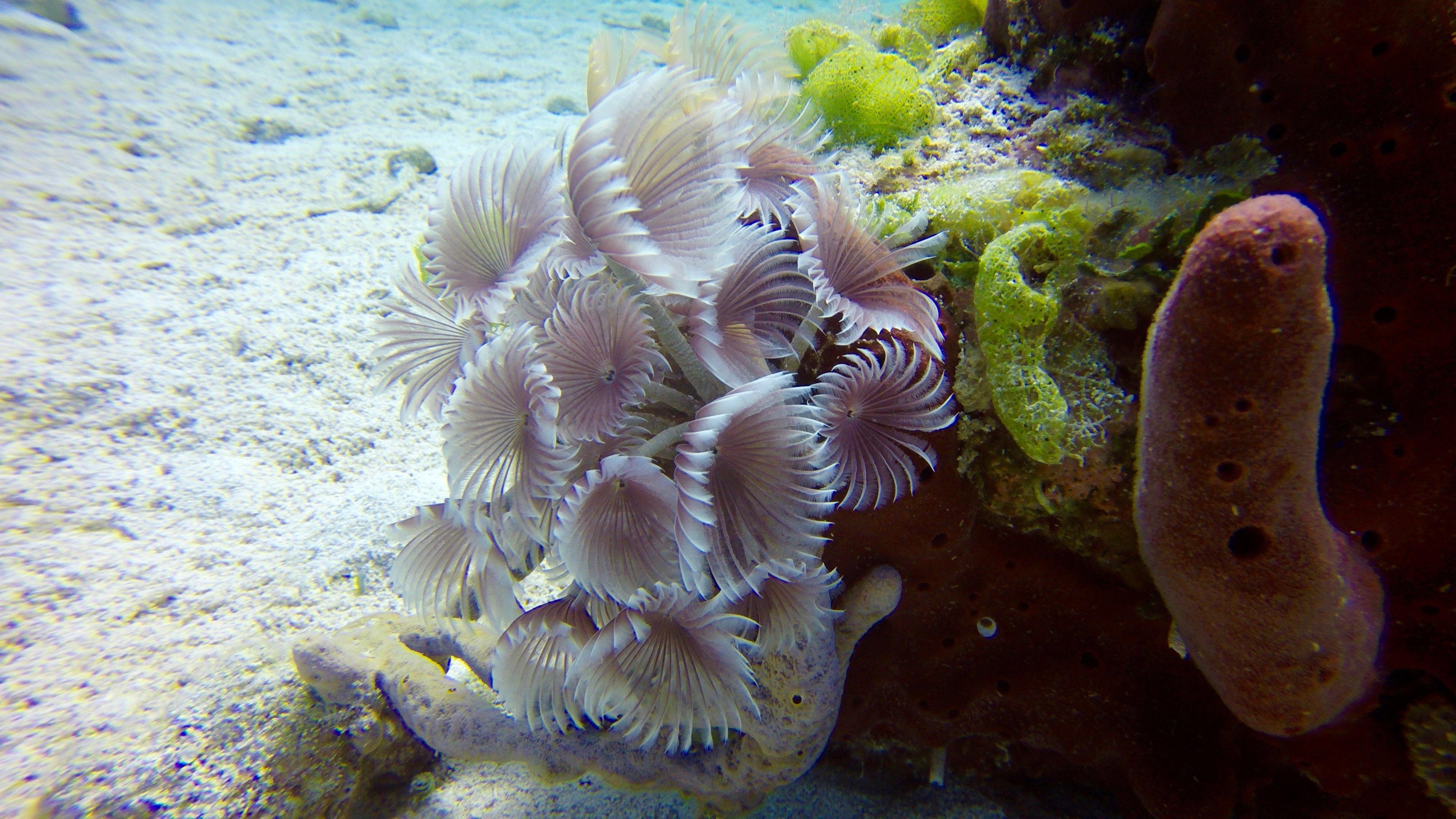 Underwater World Inc. image 0