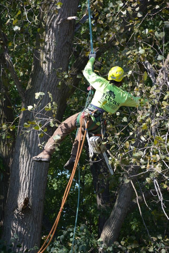 Rivas Tree Service image 7