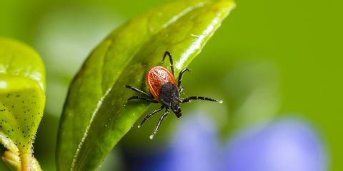 Finley Home Services, Termite & Pest Control