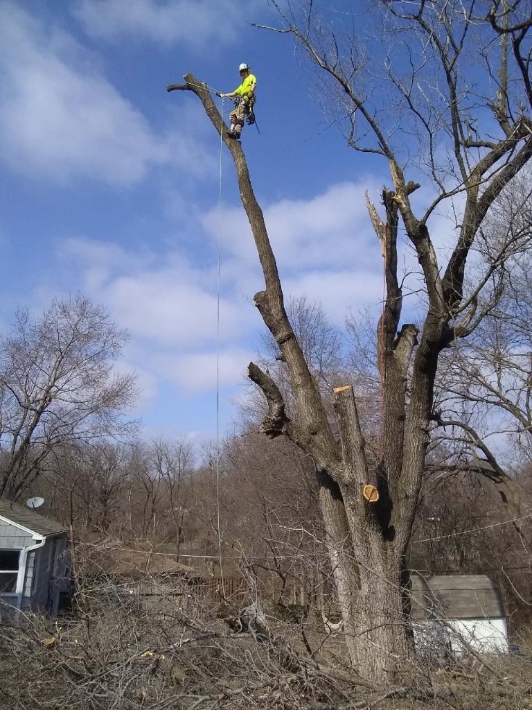 Richter's Tree Service LLC image 4