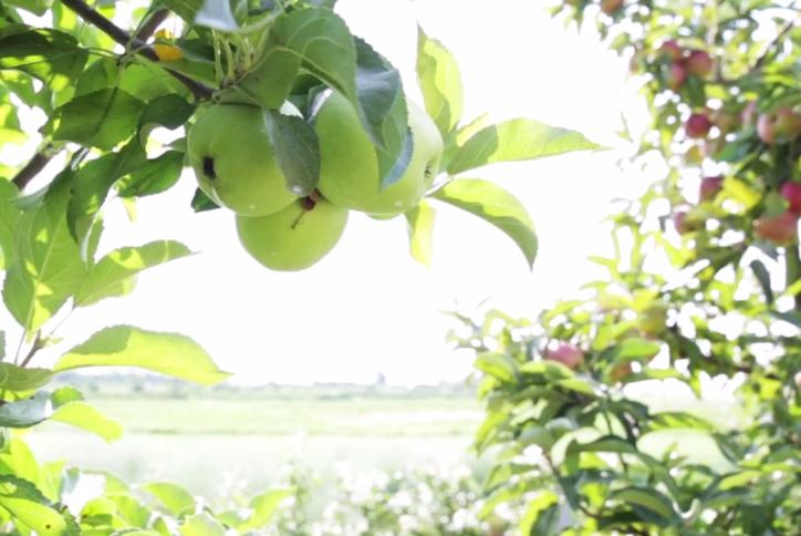 Moreland Fruit Farm image 13