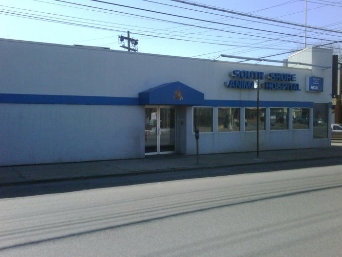 south shore animal hospital in staten island ny whitepages