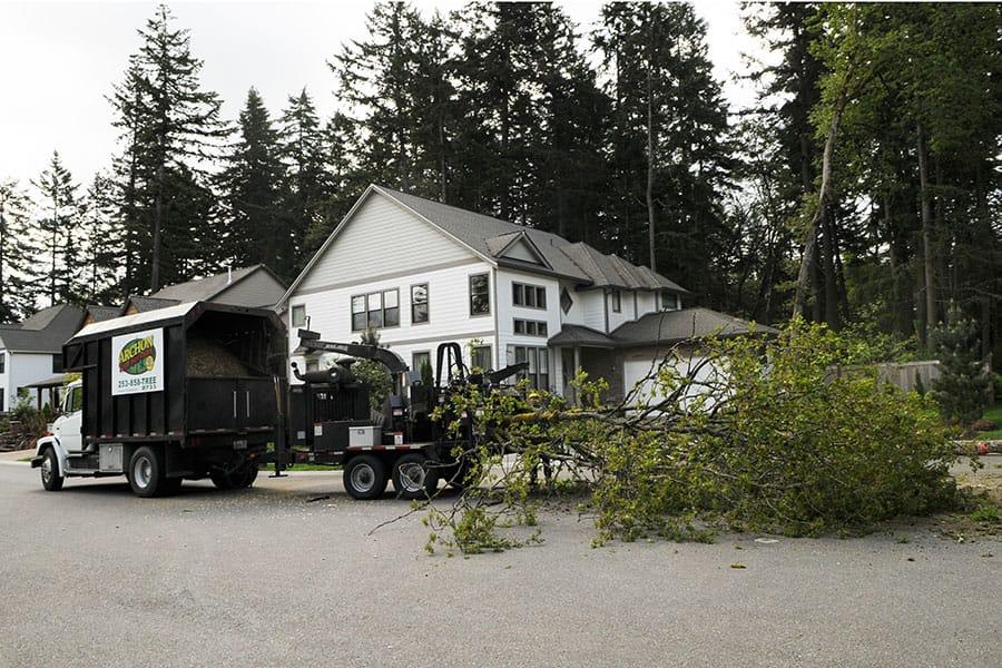 Archon Tree Services, Inc. image 4