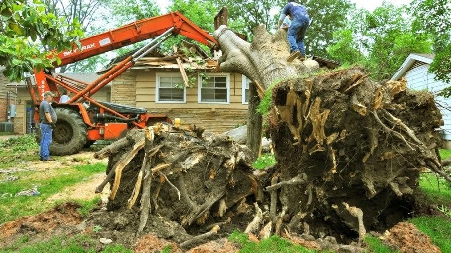 Salomon's Tree Service, LLC image 0