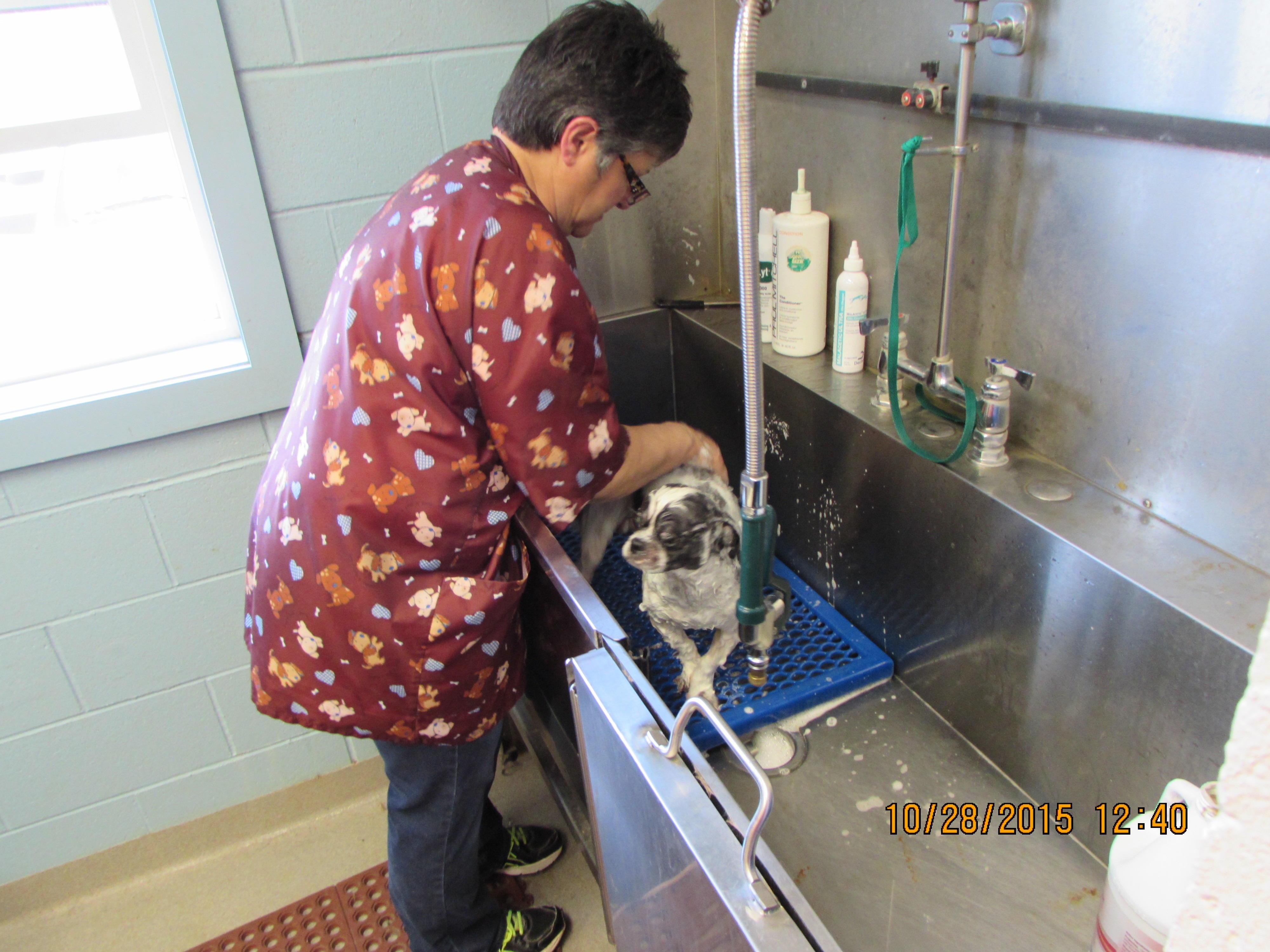 All Creatures Animal Hospital in Saint Joseph, MO, photo #1