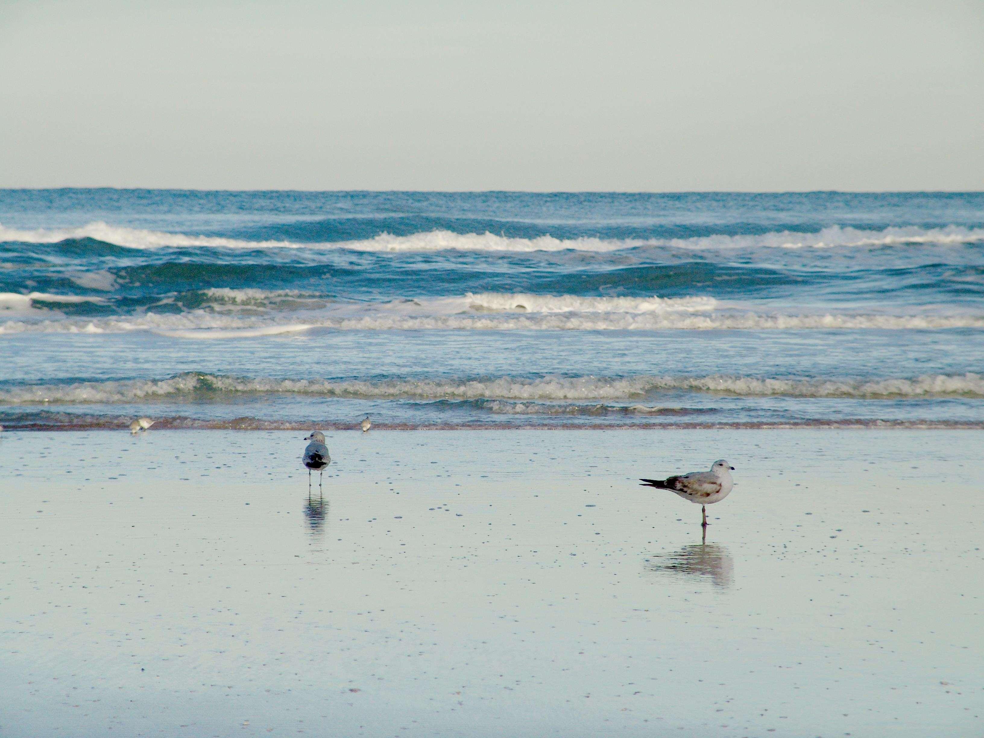 Hampton Inn Daytona Shores-Oceanfront image 1