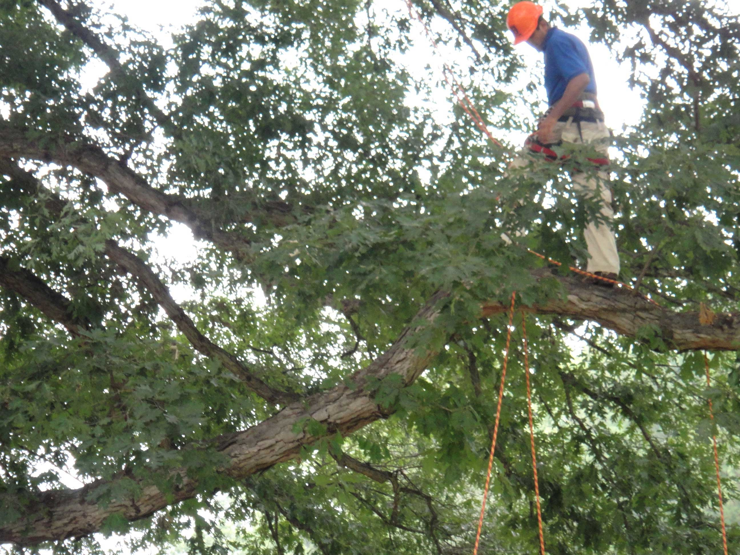 Milton's Tree Care Services image 7