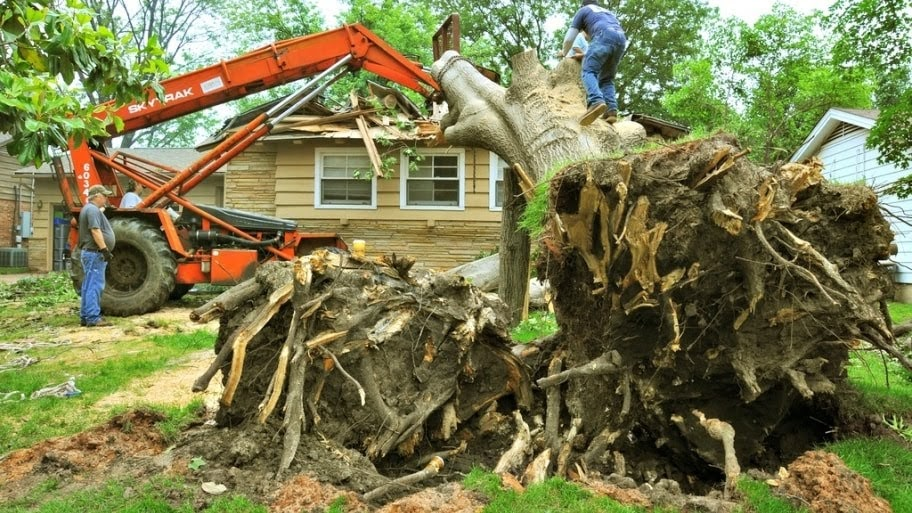 T & J Tree Experts image 4