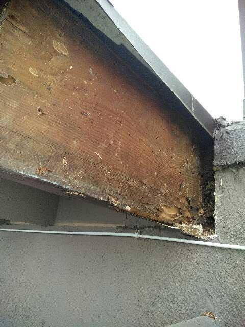 Accuracy Plus - Termite & Pest Control Exterminator in Los Angeles