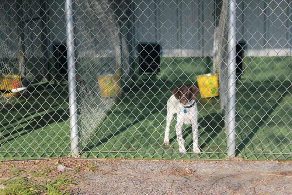Camp Bow-Wow Kennels image 11