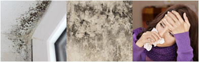 Mold Solutions by Cowleys - ad image