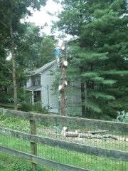 Holcomb Tree Experts image 0