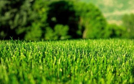 Greenkeepers Fertilization Company image 2