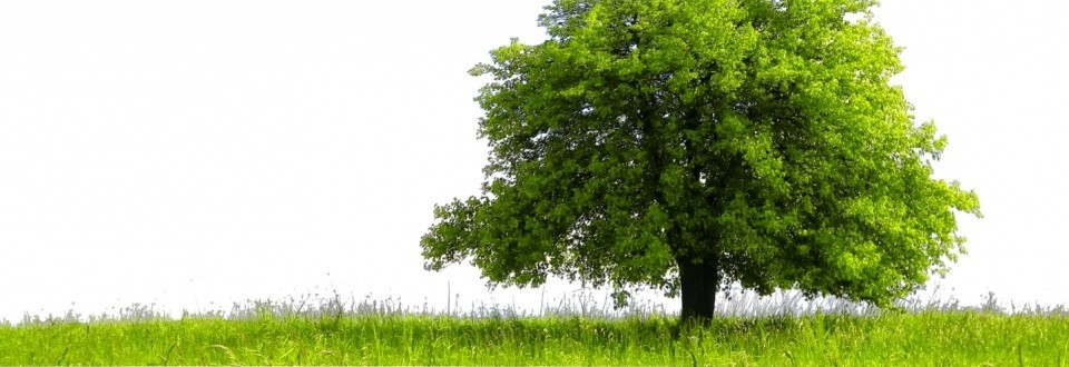 Turfco Lawn Care image 2