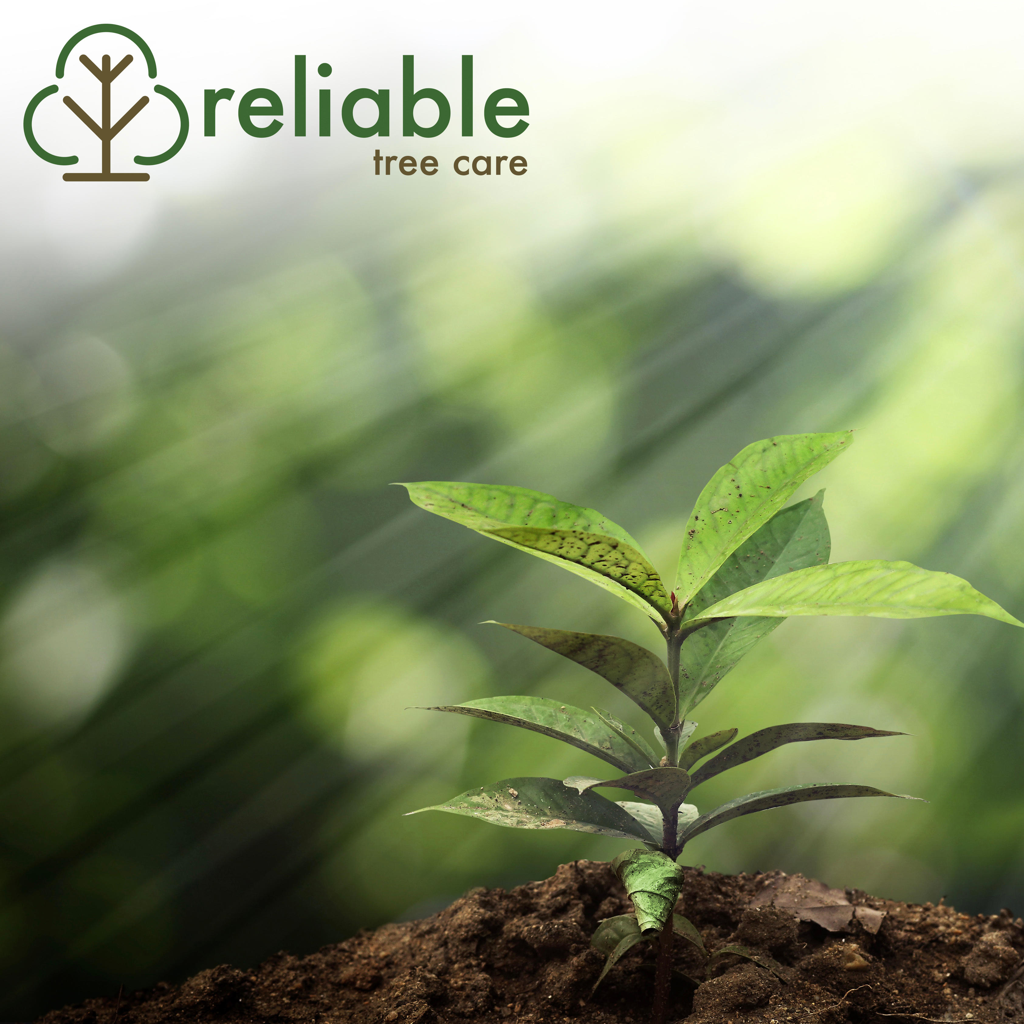Reliable Tree Care and Removal image 0