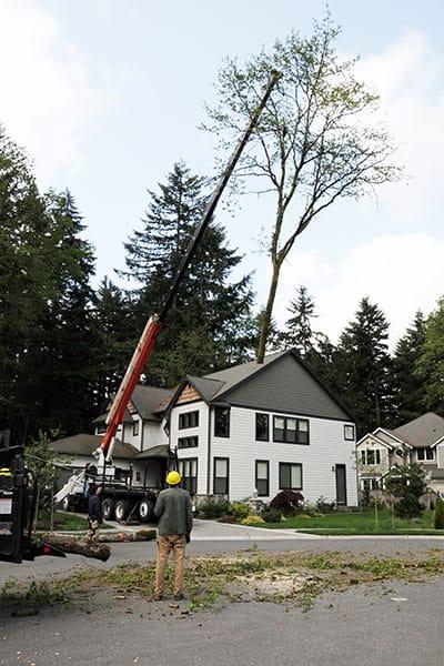 Archon Tree Services, Inc. image 8
