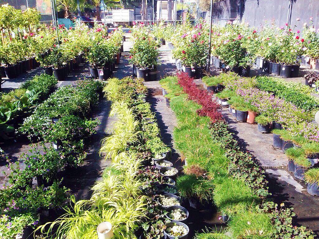 Wholesale nurseries in southern california