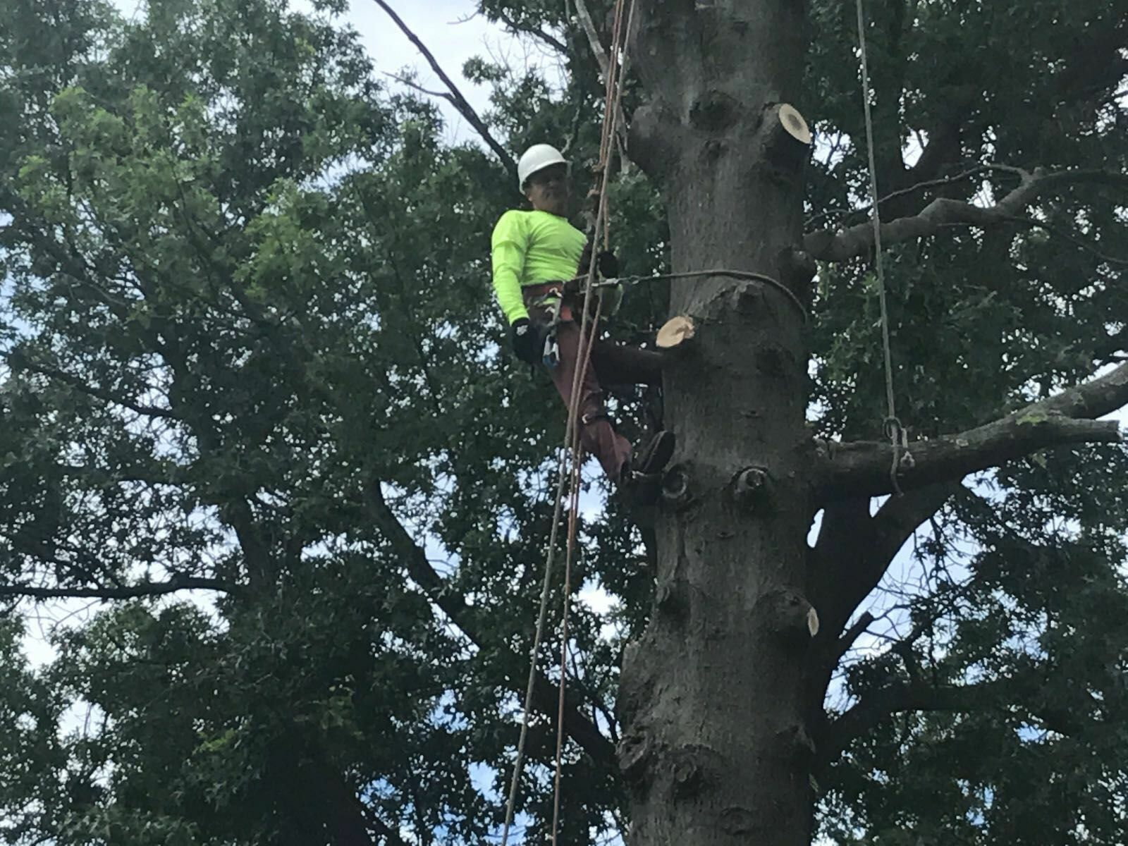 Four Brothers Tree Service Inc. image 38