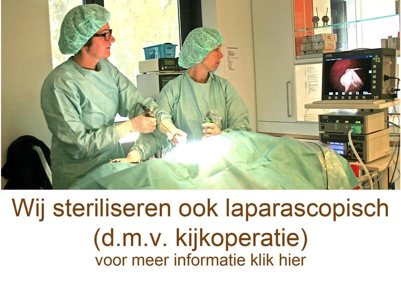 Dierenkliniek Schiedam-Noord