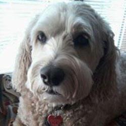 Dog Paws Mobile Grooming