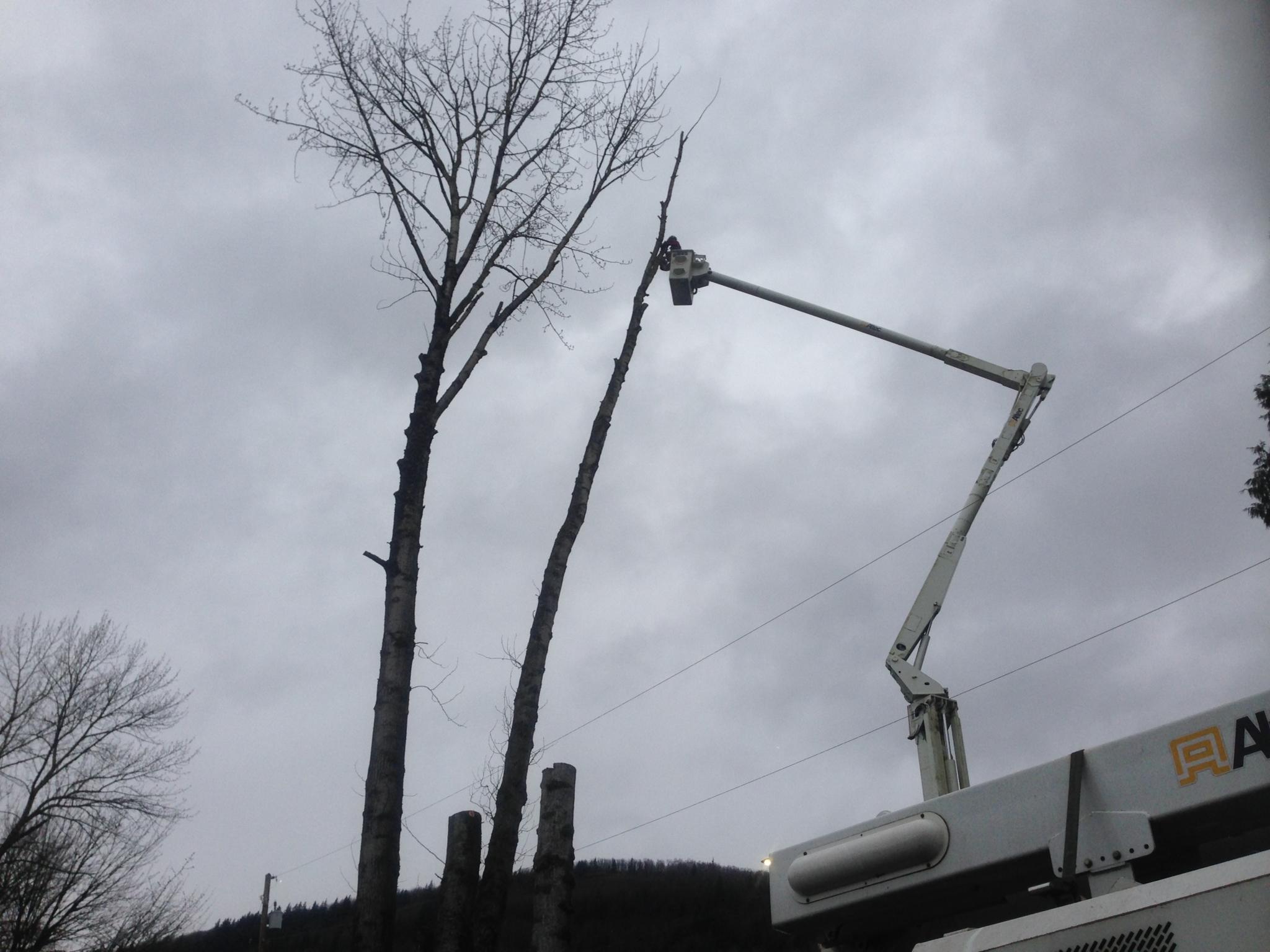 Highland Tree Service Ltd in Abbotsford