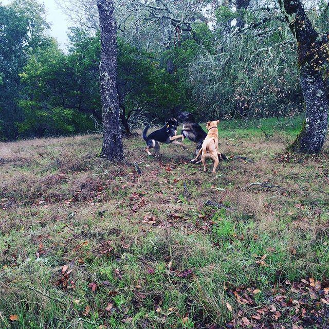 Fetch! Pet Care image 29