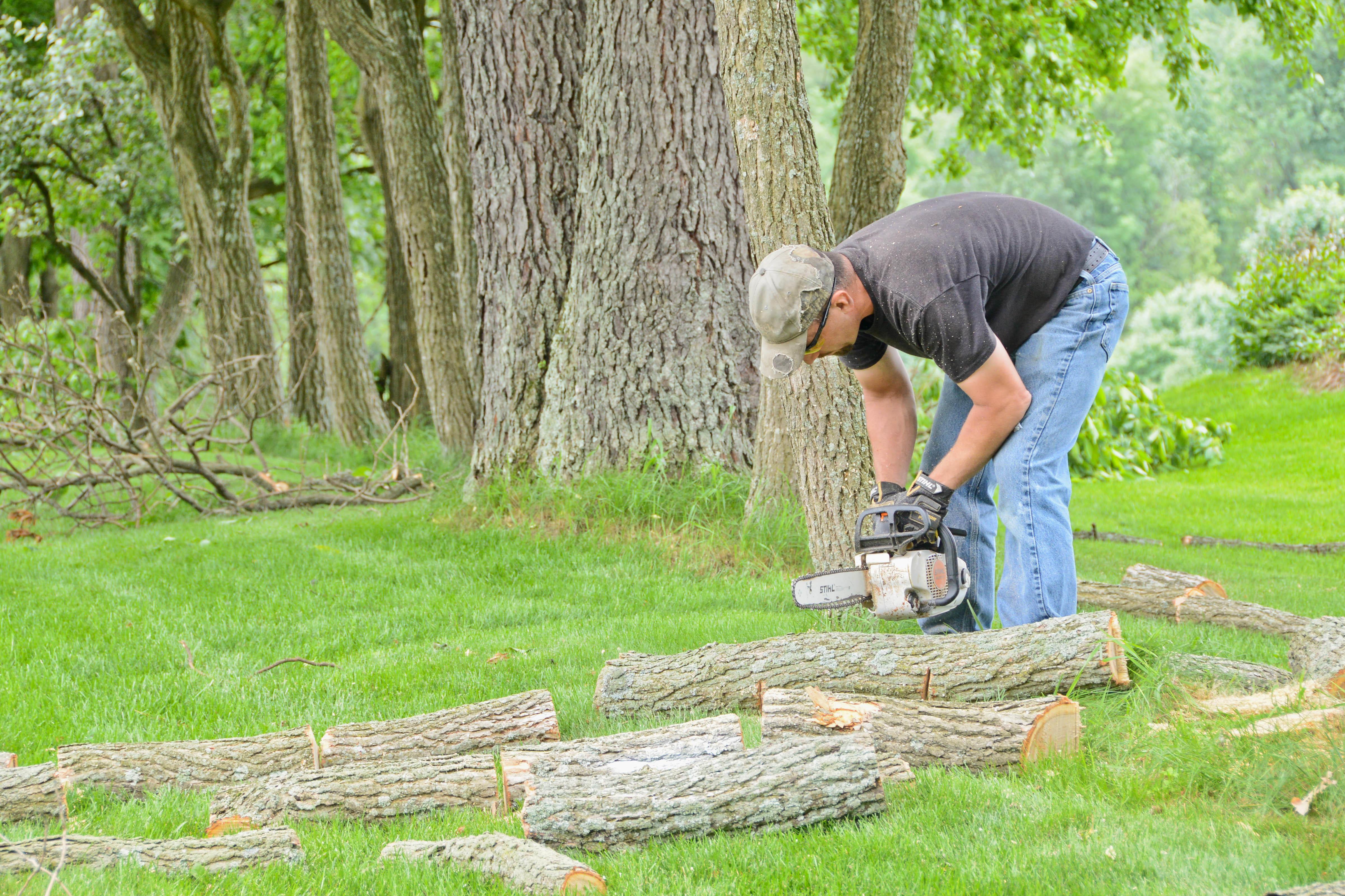 No Sweat Lawns & Trees, LLC image 1