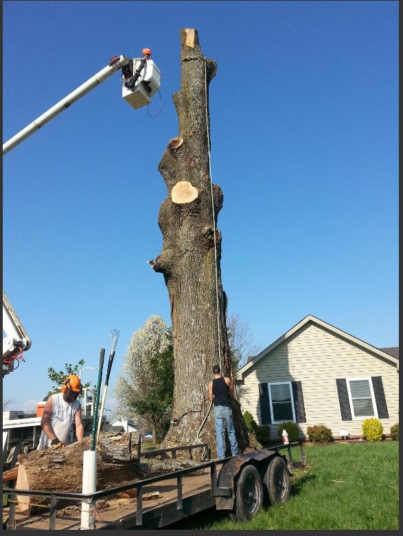 Hughes Tree Service image 1