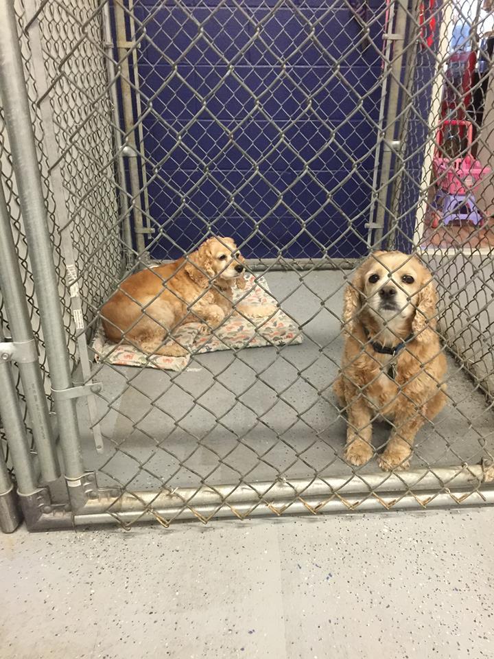 Groomer Girls Pet Resort, Inc. in Ardmore, OK, photo #10
