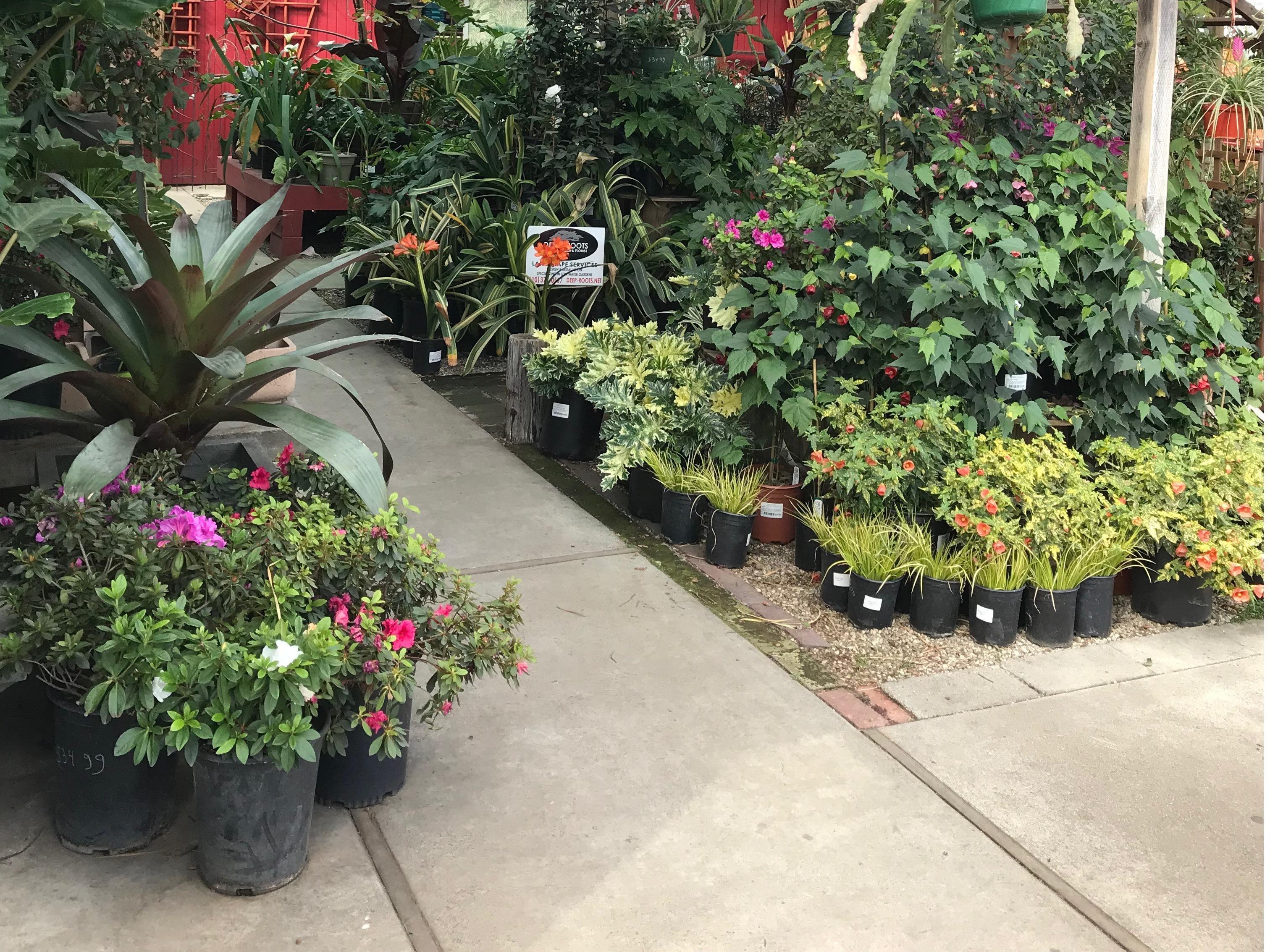 Deep Roots Garden Center & Florist