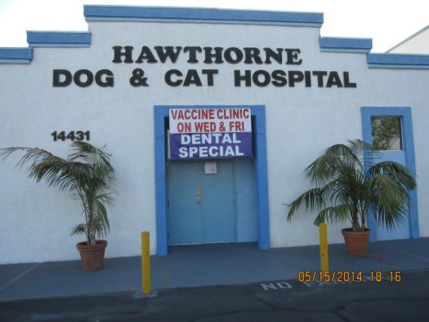 Hawthorne Dog & Cat image 4