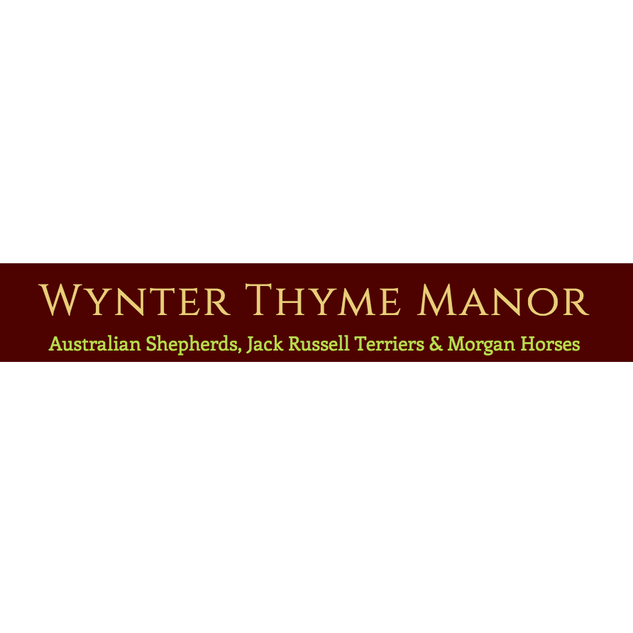 Wynter Thyme Manor - Morgan Horses 4th Gen: Lessons, Boarding, Training and Sales
