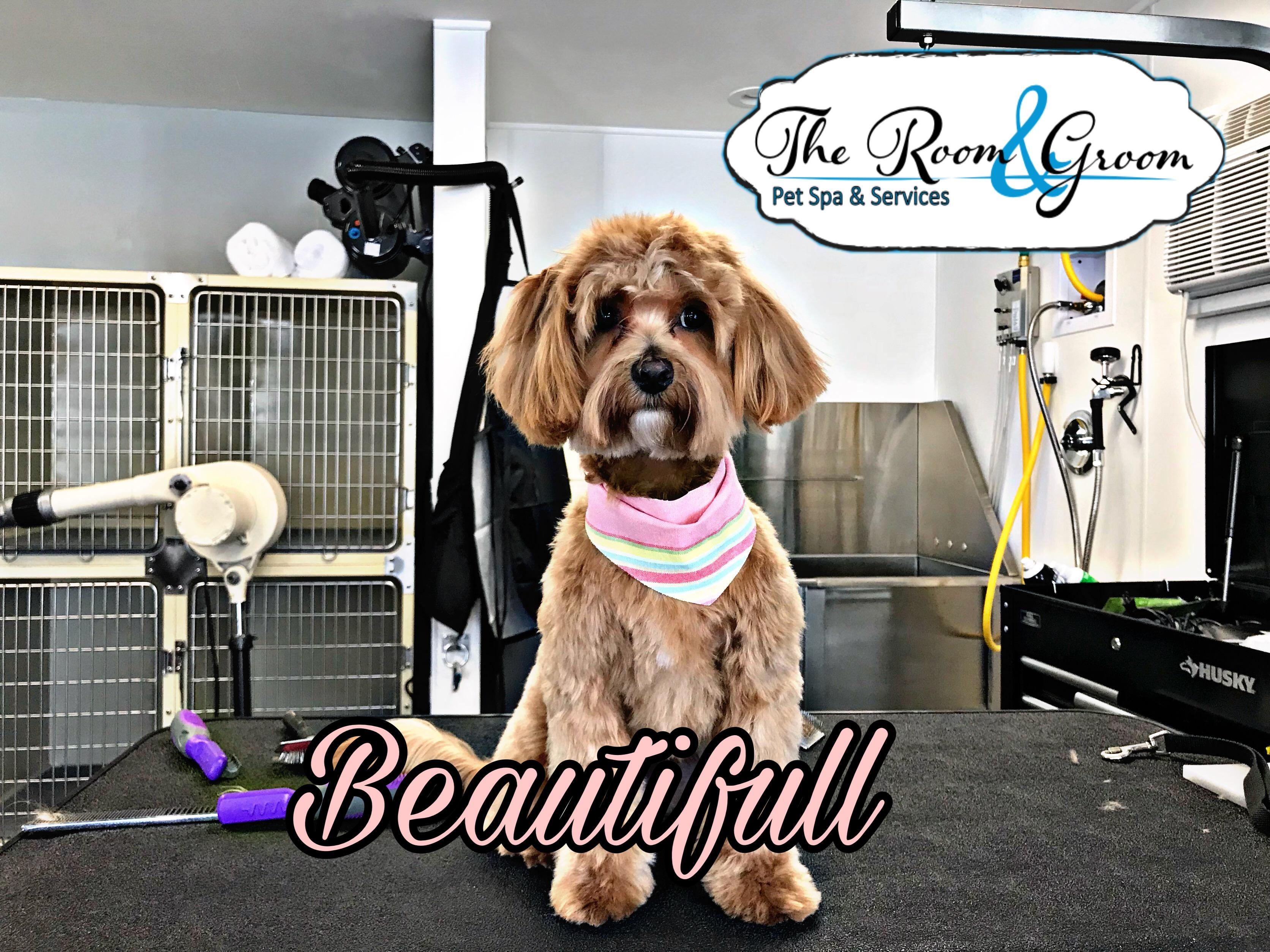The Room & Groom, Pet Spa & Services image 37