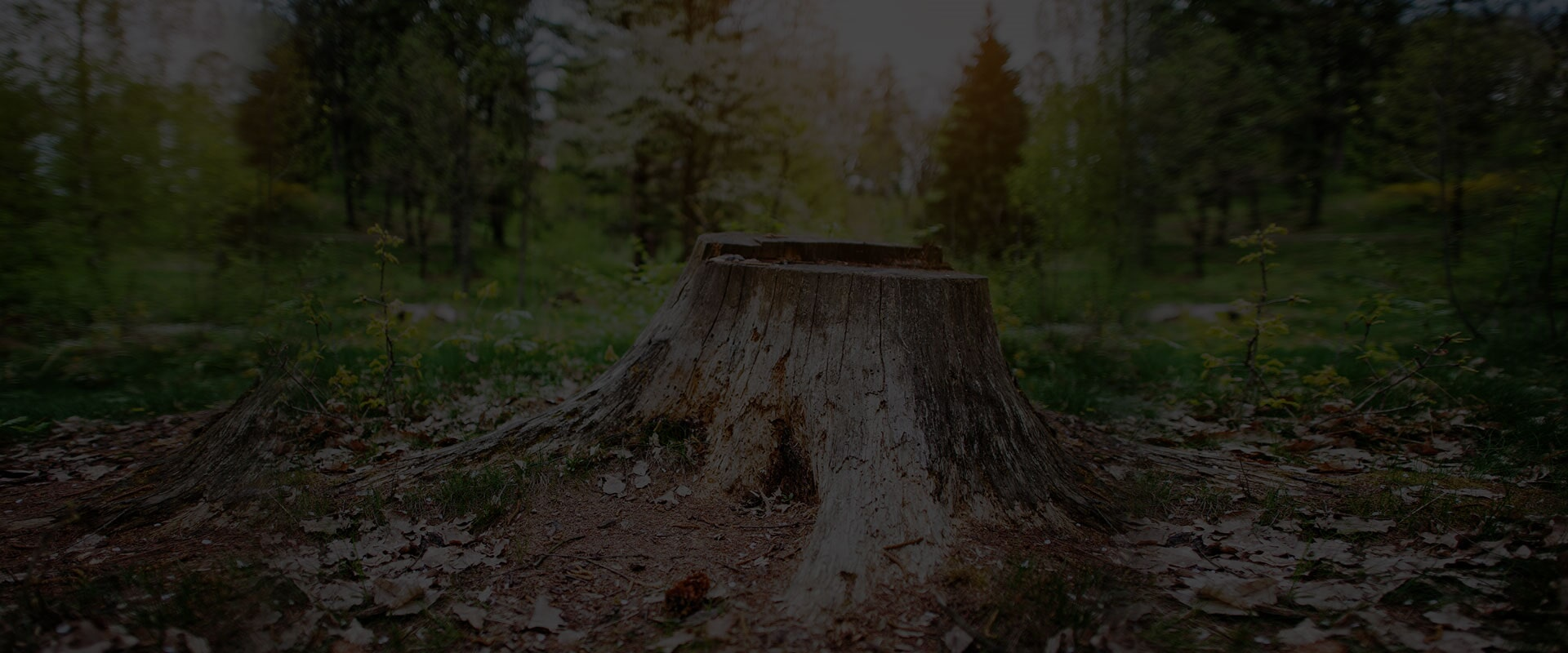 Alpine Tree Service image 7