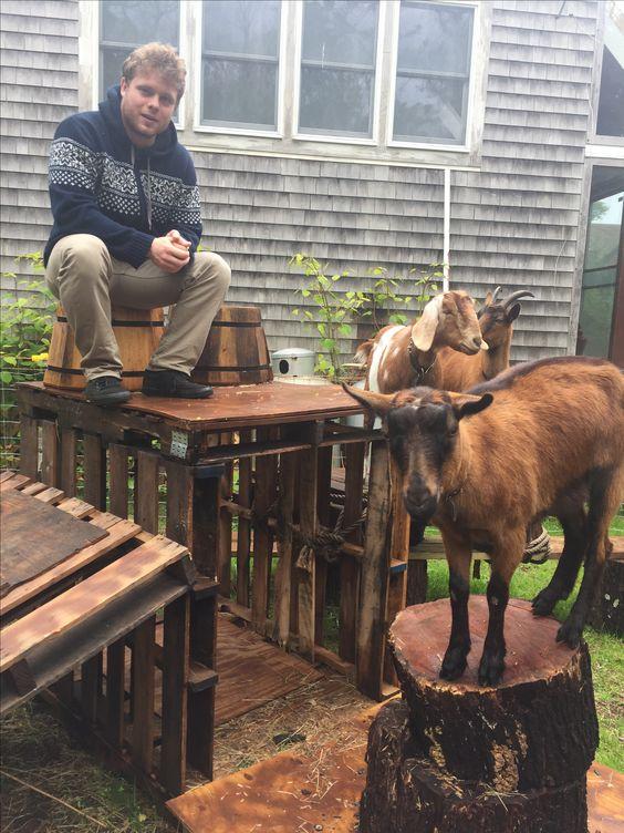 The Goat Cottage image 4