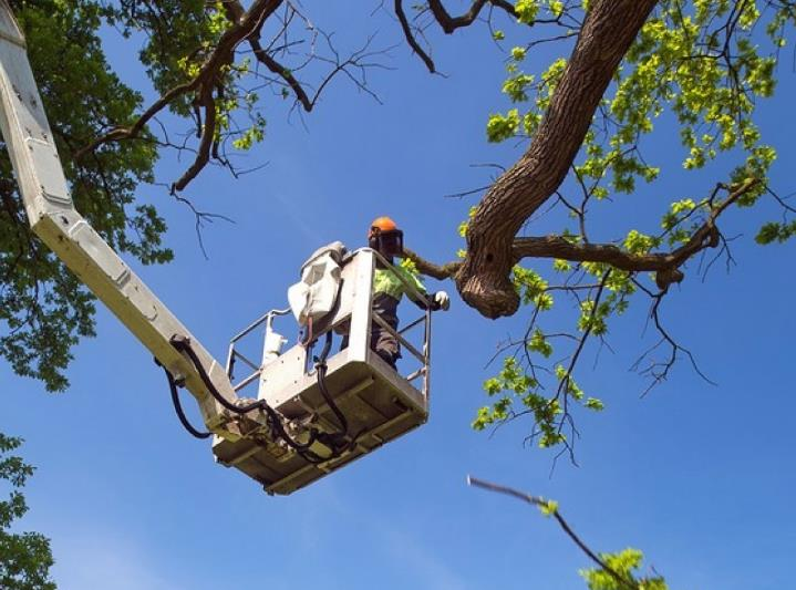 Double V Tree Service image 2