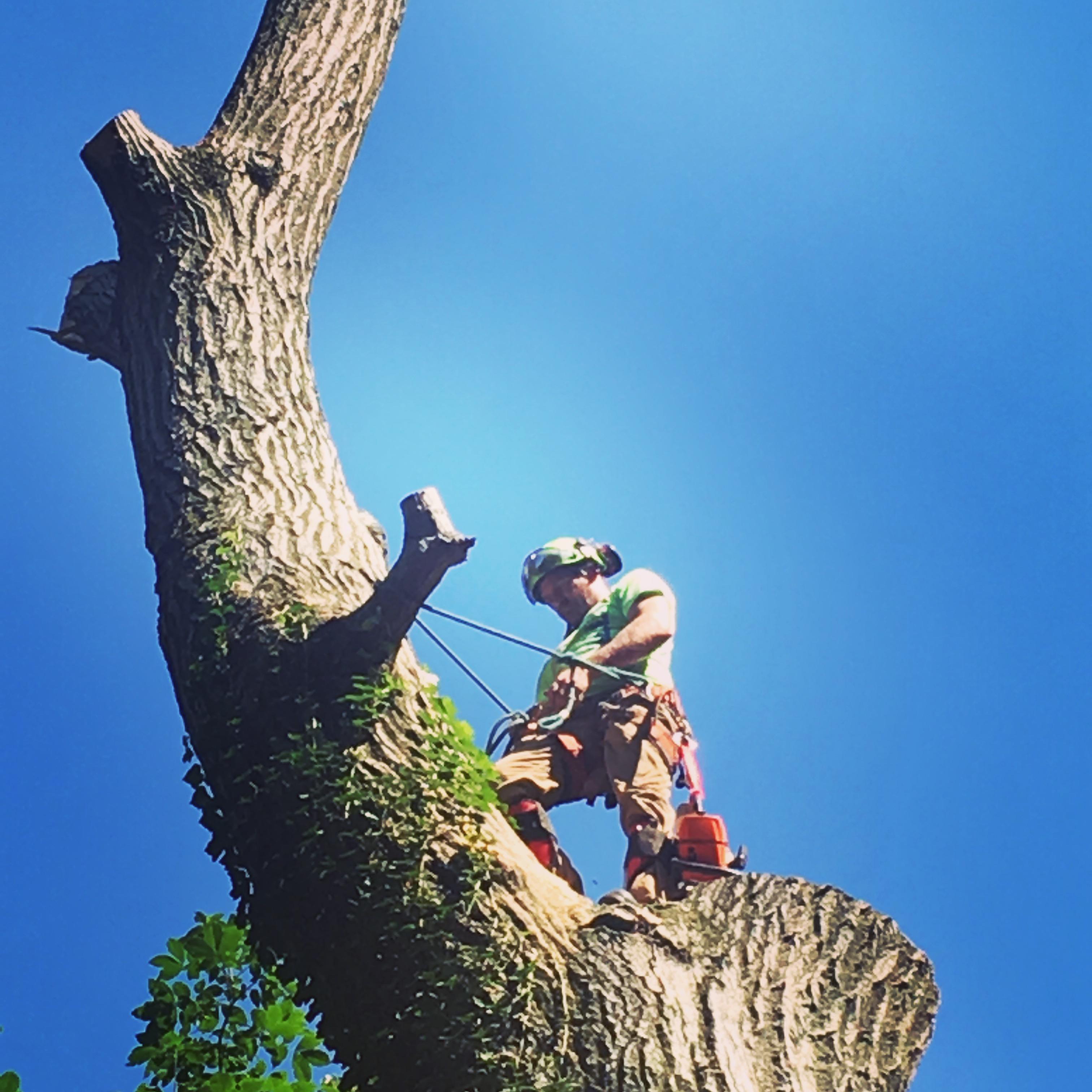 Gallo Tree Service INC image 12