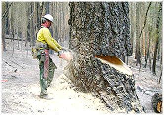 Morgan Tree Service image 7