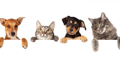 Bluegrass Pet Chalet image 0