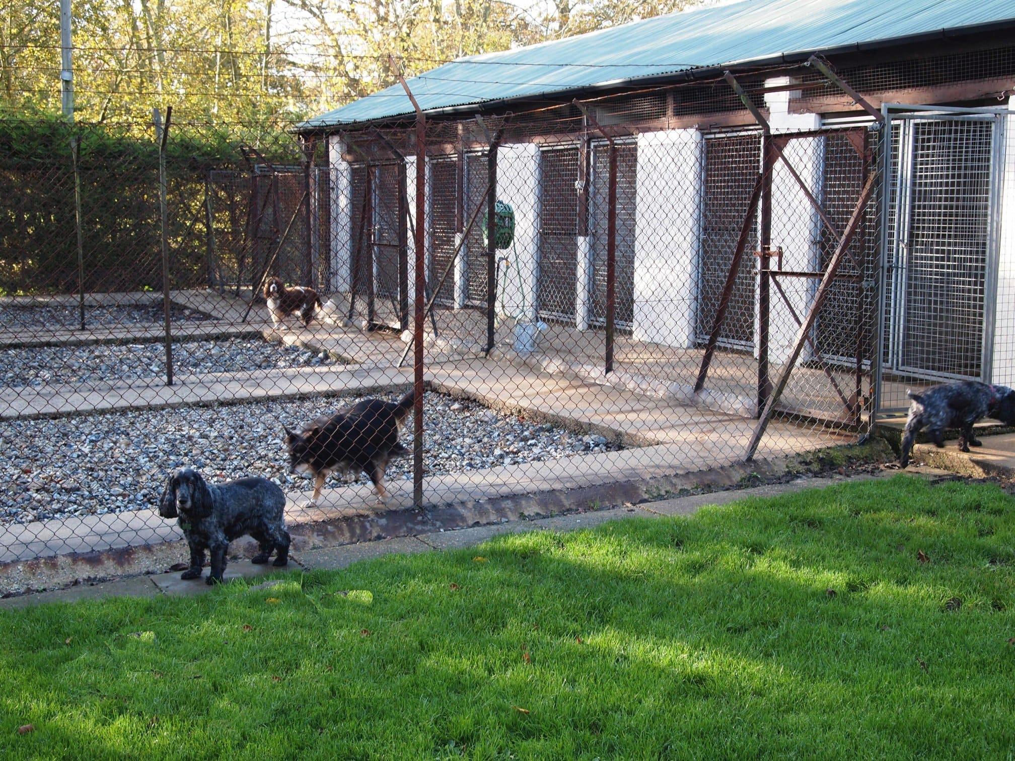 Dog Kennels Maidstone