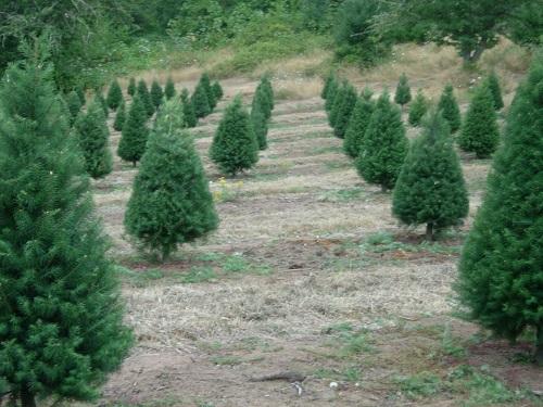 Crossties Tree Farm LLC image 0