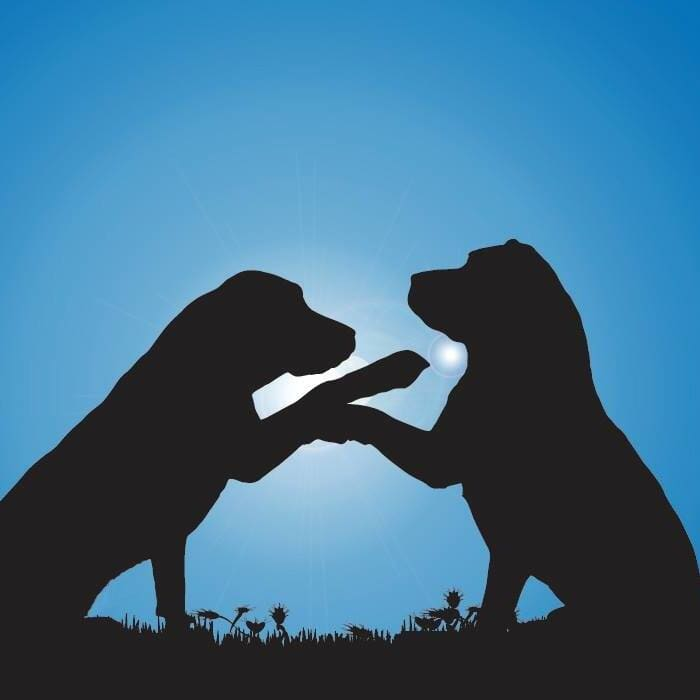Canine Connections Doggie Daycare And Boarding Villa Park Il