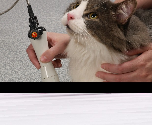 Always Helpful Vetereinary Clinic image 3