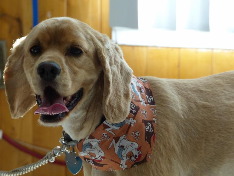 Salon Esthétique Canin Plus Enr à Jonquière