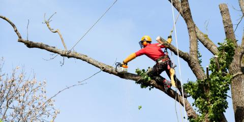 Sperling Tree Service image 0