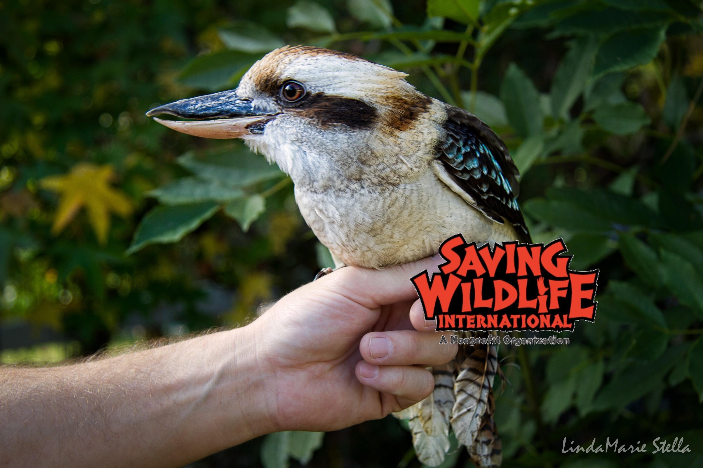 Saving Wildlife International image 3