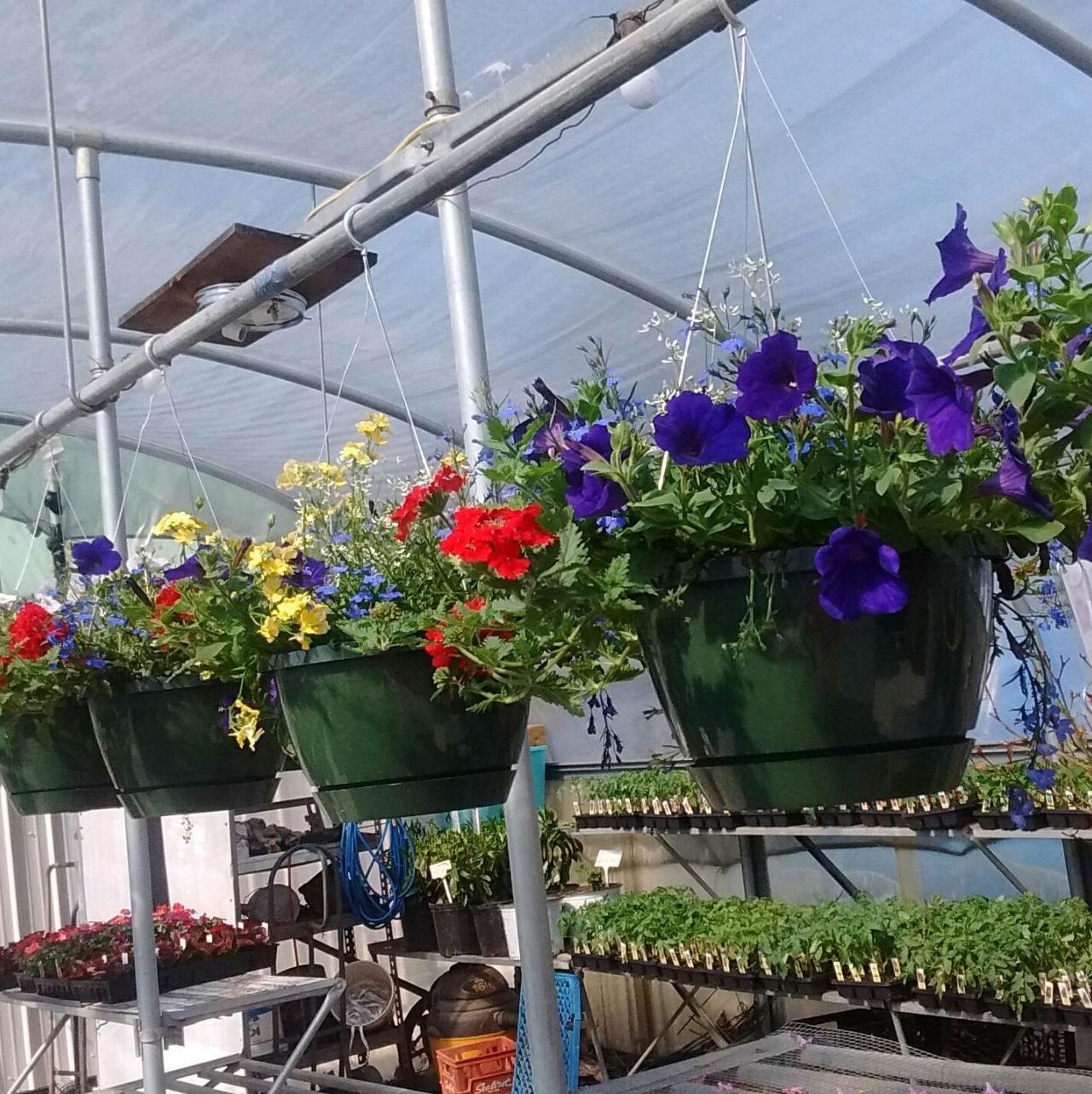Shelby Nursery & Garden Center image 5