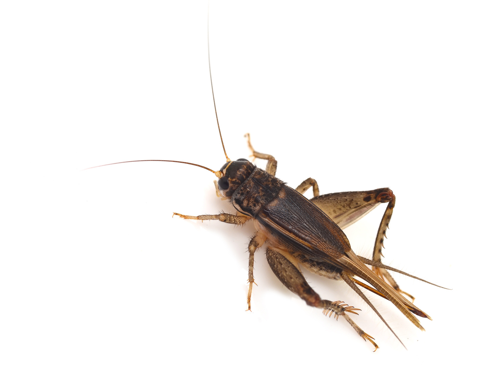 Verminator Pest Control LLC image 7