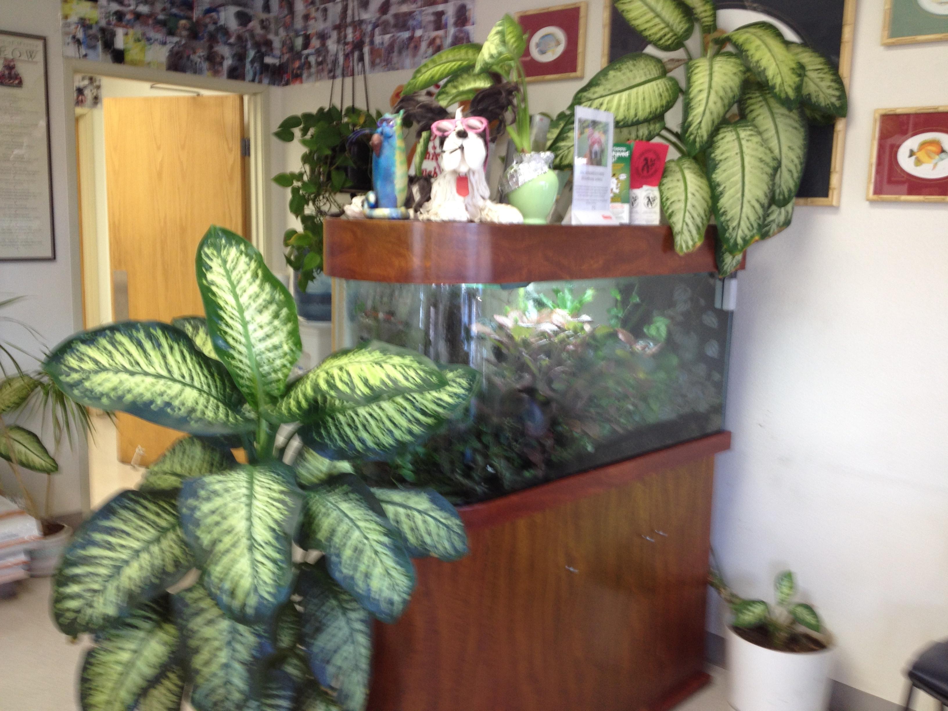 Orange Canyon Pet Clinic image 5